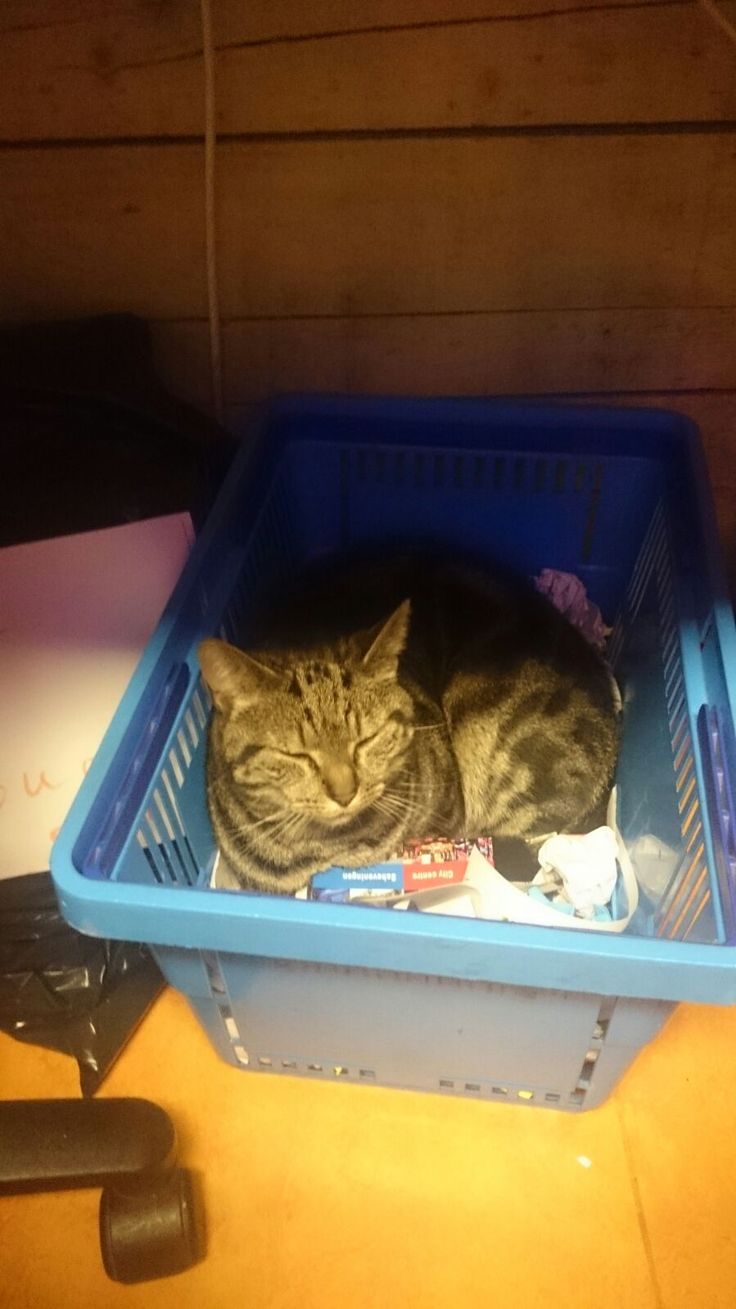 Prince in a basket of the supermarket