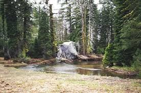 Image result for Stanislaus forest