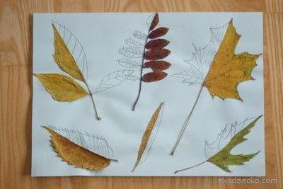 Dorysowywanie brakującej połowy- liście drawing the missing part of the leaf