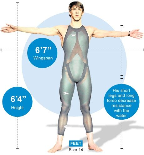 Michael Phelps: The man who was built to be a swimmer - Telegraph