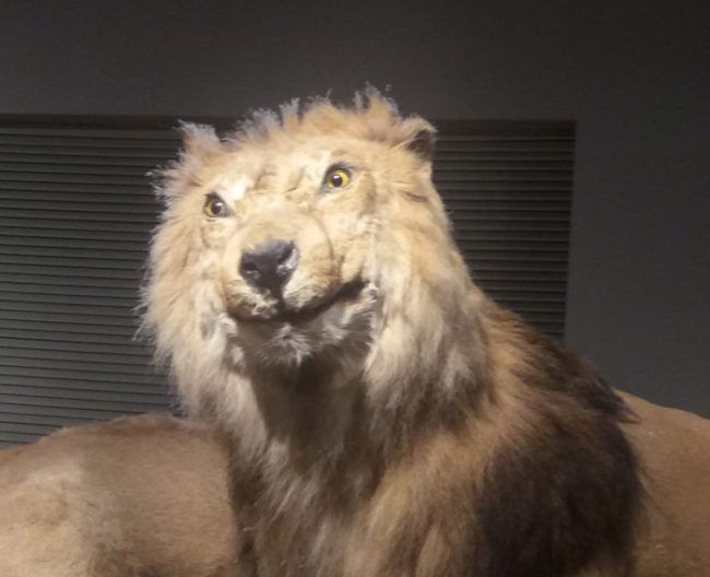 44 Best Images About Taxidermy Fails On Pinterest