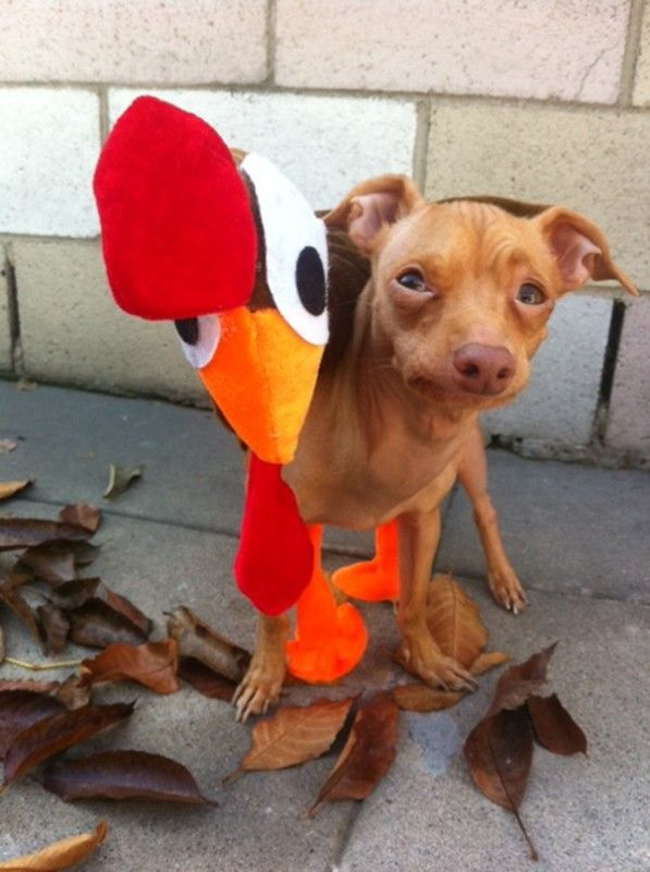 Tuna – Not A Fish! But a Cute Dog That Will Melt Your Heart