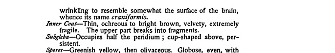 The Mushroom Book: A Popular Guide to the Identification and Study of Our ... - Nina Lovering Marshall - Google Books ...Puffball facts PAGE 128