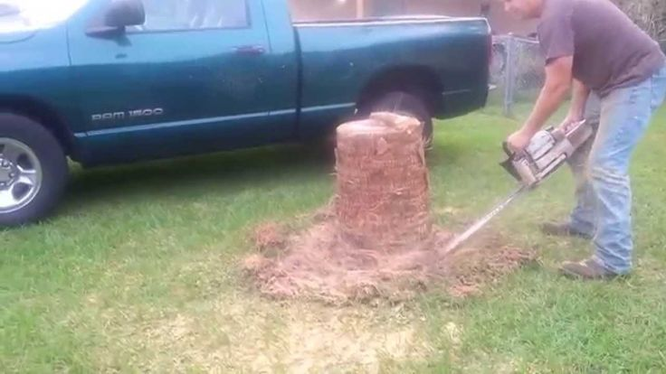 Palm tree stump removal in ocala florida