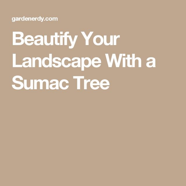 Beautify Your Landscape With a Sumac Tree