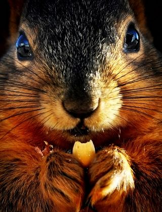 Squirrel: Afternoon Snacks, Animal Pictures, Natural Photography, Almonds Joy, Animal Track, Cute Squirrels, Funny Animal, Close Up, Furry Friends