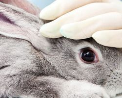 Tell Birchbox: Beauty Should be Cruelty-Free - The Petition Site
