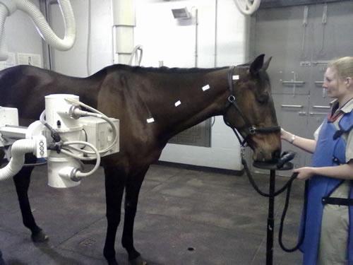 11 best Radiologia Veterinaria images on Pinterest Horses - equine veterinary nurse sample resume