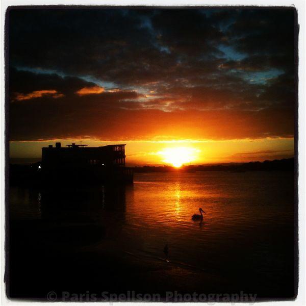 Sunset and a pelican #Pelican #Sunset #color #Noosa #Australia, #Nature #Landscapes