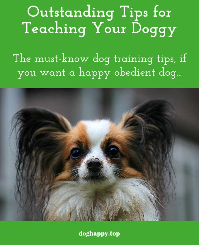 You Can Train Your Doggy Quickly And Simply Dog Training Dogs