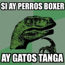 Meme Filosoraptor - si ay perros boxer ay gatos tanga - 454868