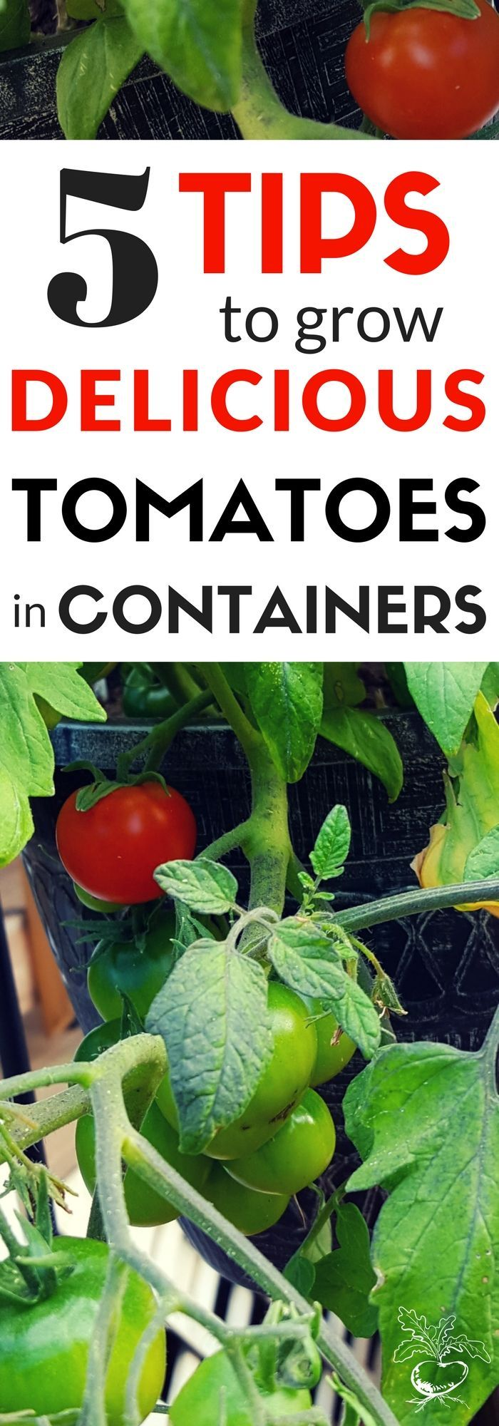 How much to water tomatoes in containers - Want To Grow The Very Best Tomatoes In Containers Follow These 5 Tomato Gardening Tips