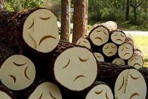 Tavaly februárban kiirtották az összes fát a Zodony utcai sporttelepen . Akkor kezdeményezésemre minden kivágott fa helyett kettőt ültetett a kerület , ennek köszönhetően valósult meg az uszoda melletti Babapark is.Idén nyáron a vihar tizedelte meg a kerület faállományát. Most pedig a MÁV kezdett brutális favágásba és a...