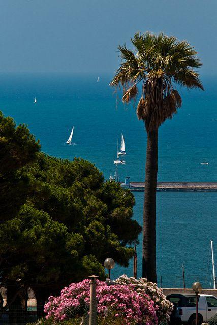 La palma del rettore ,Sardinia,Italy