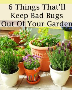 6 Things that'll keep bad bugs out of your garden. #homesfornature