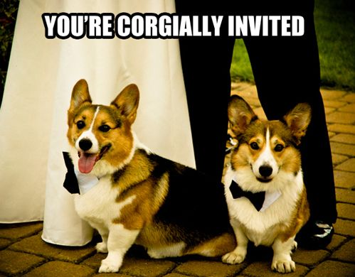 you're CORGIALLY invited!