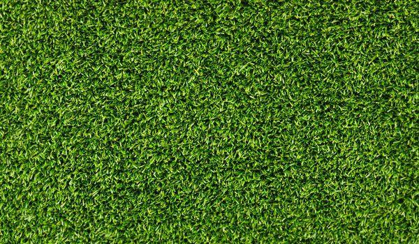 Обои на рабочий стол: зелень, картинки для рабочего стола, лето, макро фото, свежесть, трава, фоновые обои
