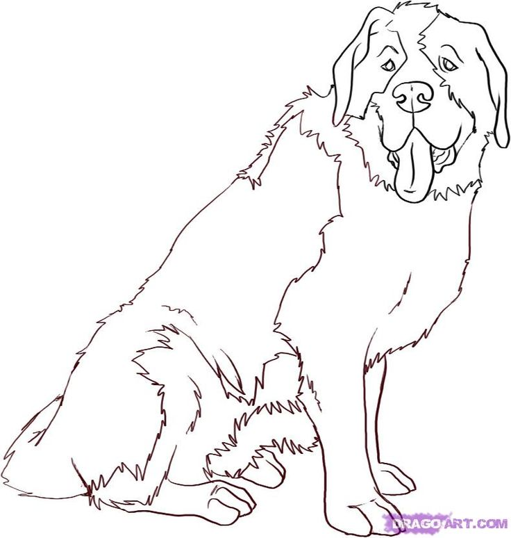 how to draw a cartoon saint bernard