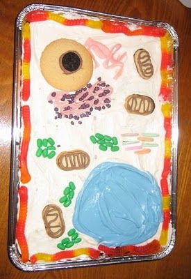 Reproducing cells on a cake helps visual learning.... Models cel.lulars menjables / Edible plant cell