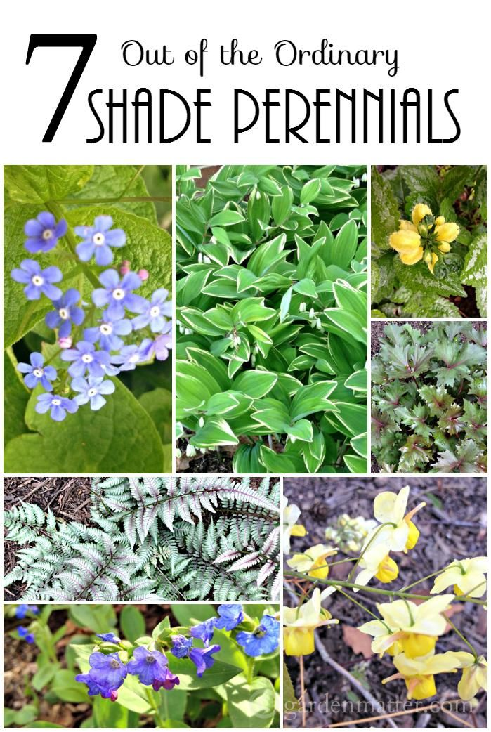 If you are looking for something new to grow in shade, here are seven hardy perennials that will thrive and give you texture and color in the shade.