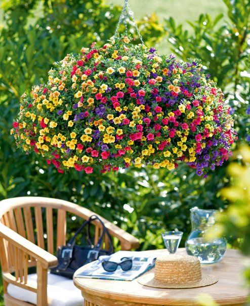 beautiful million bell hanging baskets
