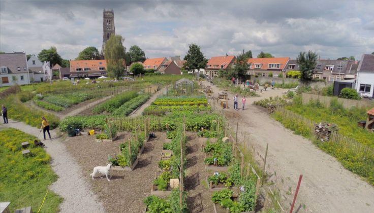 VN rapport: kleinschalige biologische  landbouw is de enige manier om de wereld te voeden