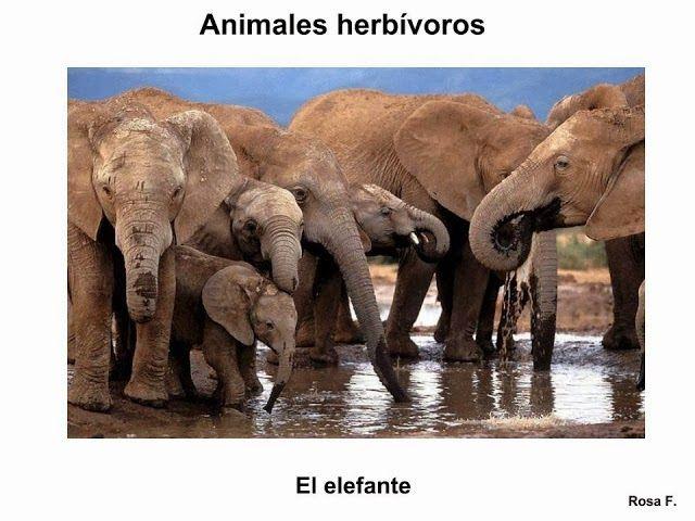 Vocabulario en imágenes. Maestra de Infantil y Primaria.: Animales salvajes. Vocabulario en imágenes.