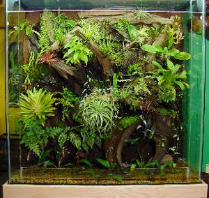 Turn an old fish tank into a terrarium! its genius! and I happen to have an empty fish tank :D