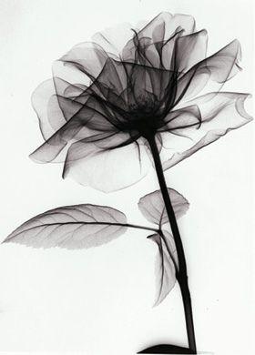 X-ray flower