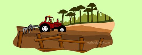 cutting down trees for farming purposes