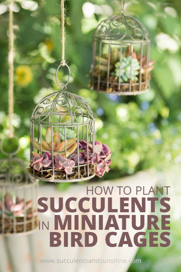 These mini succulent bird cages were so fun and simple to make. Find out how to make your own!