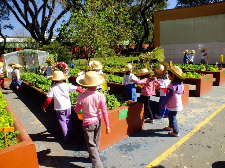 Horta escolar com canteiros elevados