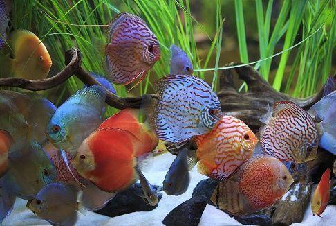 De agua dulce | Los peces de agua dulce o dulciacuícolas viven en ríos y lagos. A continuación encontrará en este subapartado, por orden alfabético, todos los nombres de peces de agua dulce registrados en la última edición del diccionario académico. Cuando el mismo animales conocido con varios nombres, éstos se encuentran agrupados, siendo el primero de ellos el más común o al que da preferencia la Real Academia Española. Barbo 'pez de río, fisóstomo, de color fusco por el lomo y…