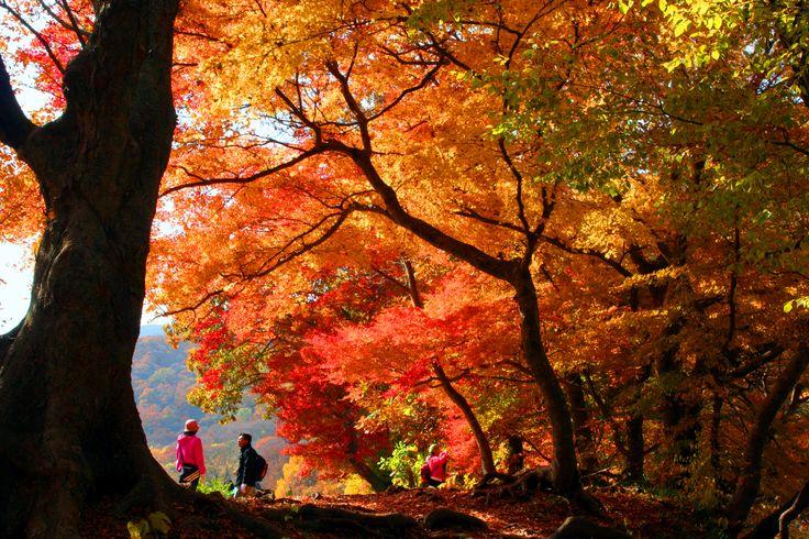 단풍이 만드는 가을 추경을 바라보며 오르는 선운산 트레킹  (사진_제36회 관광사진공모전 입선 전희철)