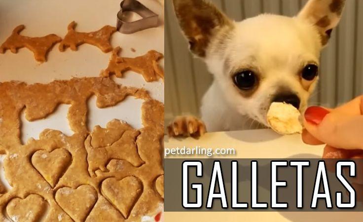 Receta de galletas para perros. Aprende 5 recetas de galletas para perros fáciles (con VIDEOS). Algunas son de frutas como la Manzana y otras de Pollo o car