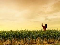 GMO corn crop trials suspended in Mexico | Grist