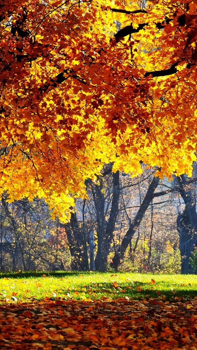 40 Free Amazing Fall Wallpaper Backgrounds For Iphone Fall Wallpaper Iphone Wallpaper Landscape Fall Backgrounds Iphone