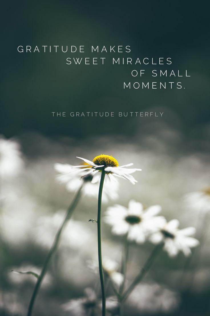 g r a t e f u l ♡ Gratitude makes sweet miracles of small ...