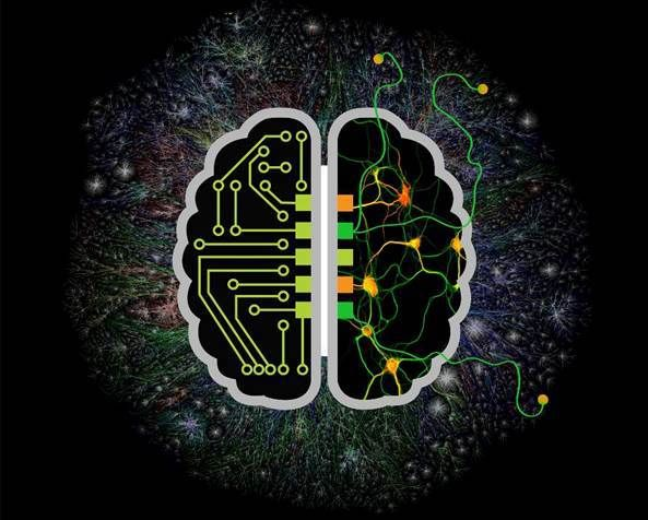 Exploring the Brain's Architecture: Your Mind's Hardware Explained