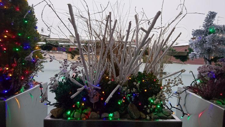 Świąteczna donica na tarasie