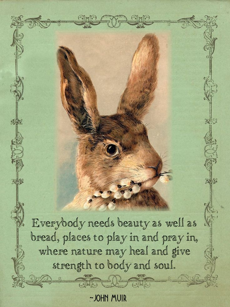 Everybody needs...: Spring Equinox, John Muir, Quotes, Easter Cards, Easter Bunnies, Beautiful, Easter Decor, Breads, Places