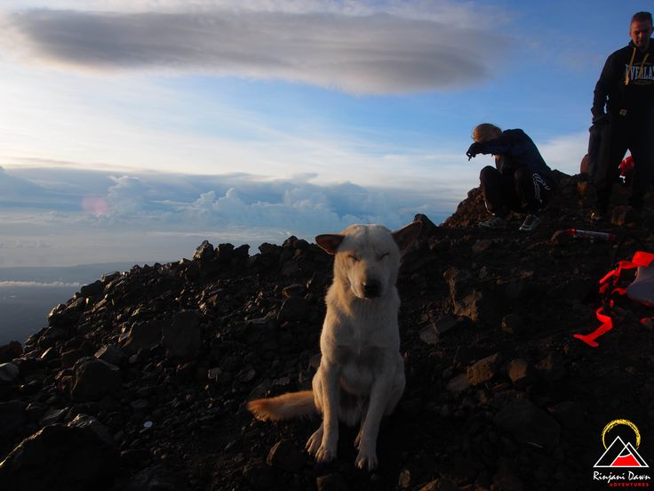 Putih, on the summit. www.rinjanidawnadventures.com