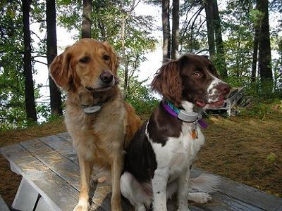 When to use a dog shock collar         by Lindsay Stordahl on October 28, 2013