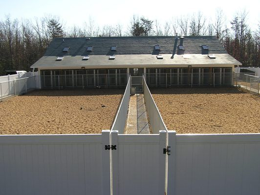 best dog boarding kennel building | Picture of the back of the kennel and airing yards.