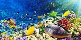 Afbeeldingsresultaat voor mooie vissen in de zee
