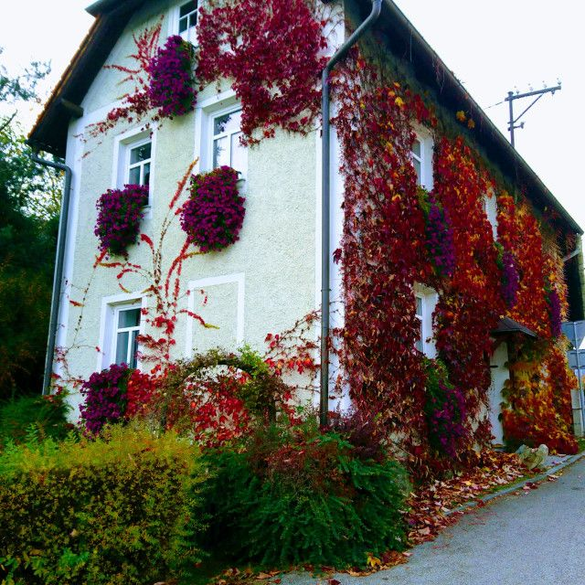 'Autumn colors on a village house' on Picfair.com