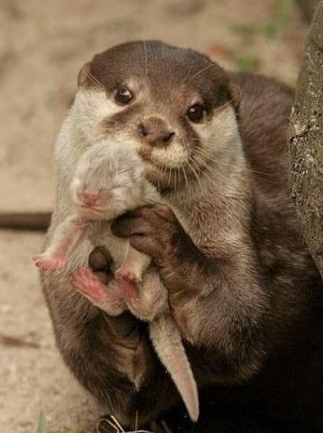 Mother otter wants you to see her precious baby......