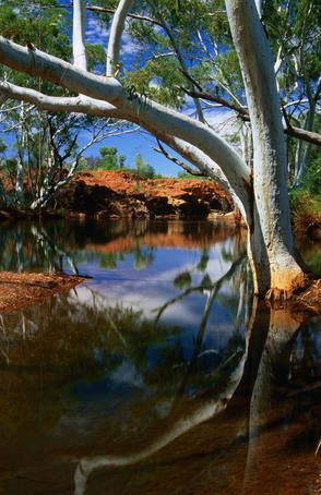 Billabong [billabong = a branch of a river forming a backwater or stagnant pool] in outback Western Australia.
