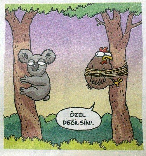 Özel Değilsin Koala, karikatür