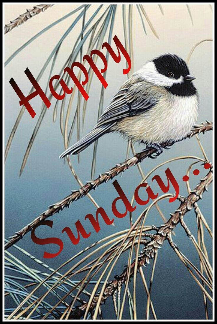 Happy Sunday    Days of the week   Sunday greetings